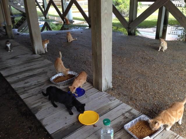 Feeding Ocracats