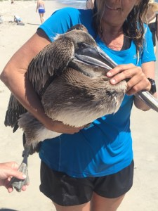 Sarah Searight with pelican