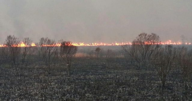 Fire burning along the ground Tuesday afternoon. (U.S. Fish and Wildlife Service)