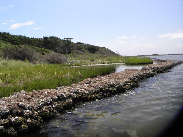 The living shoreline created in 2013 at Springer's Point.