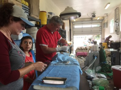 Dr. Howard Johnson of Boone, NC, will be on the island next week to conduct a spay-neuter clinic in the OVFD on island feral cats. Helping are Melinda Sutton, left, and Johnson's daughter.
