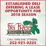 fig_tree_web_300x300