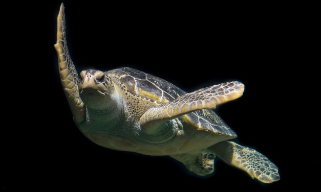 Sea Turtles Being Released Into Wild