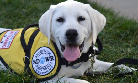 Fundraiser for Service Dogs By Warren Retrievers