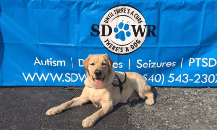 Diabetic Alert Dog needs lifesaving surgery