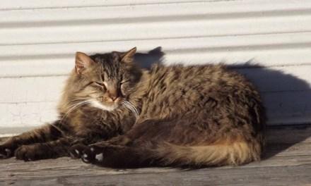 Seaside Heights: Cat stuck in Storm Drain