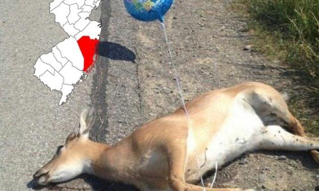 TR: DOA Deer