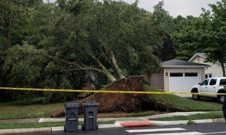 Brick: Tree down on home