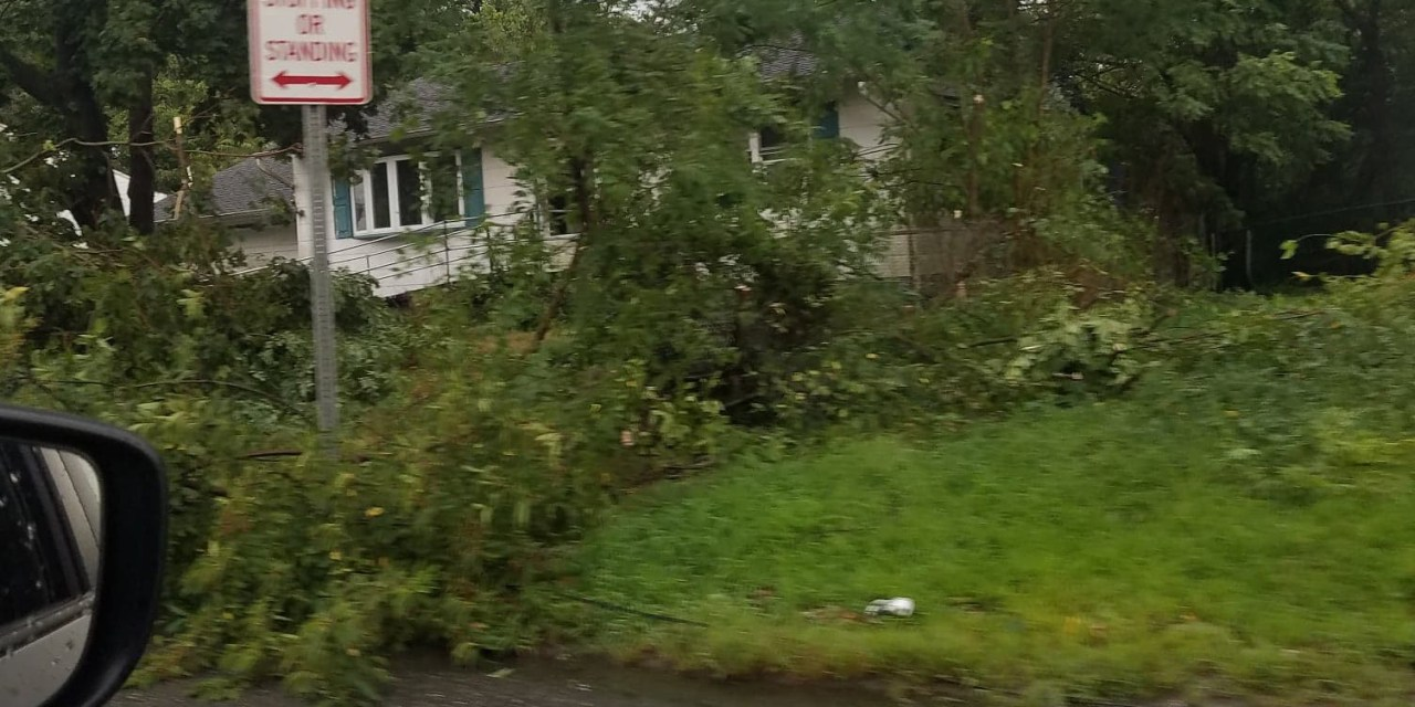 SOUTH TOMS RIVER: Tree Down On Wires
