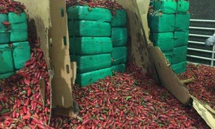 California: 4 tons of Marijuana valued at $2.4 Million seized in a shipment of Jalapenos
