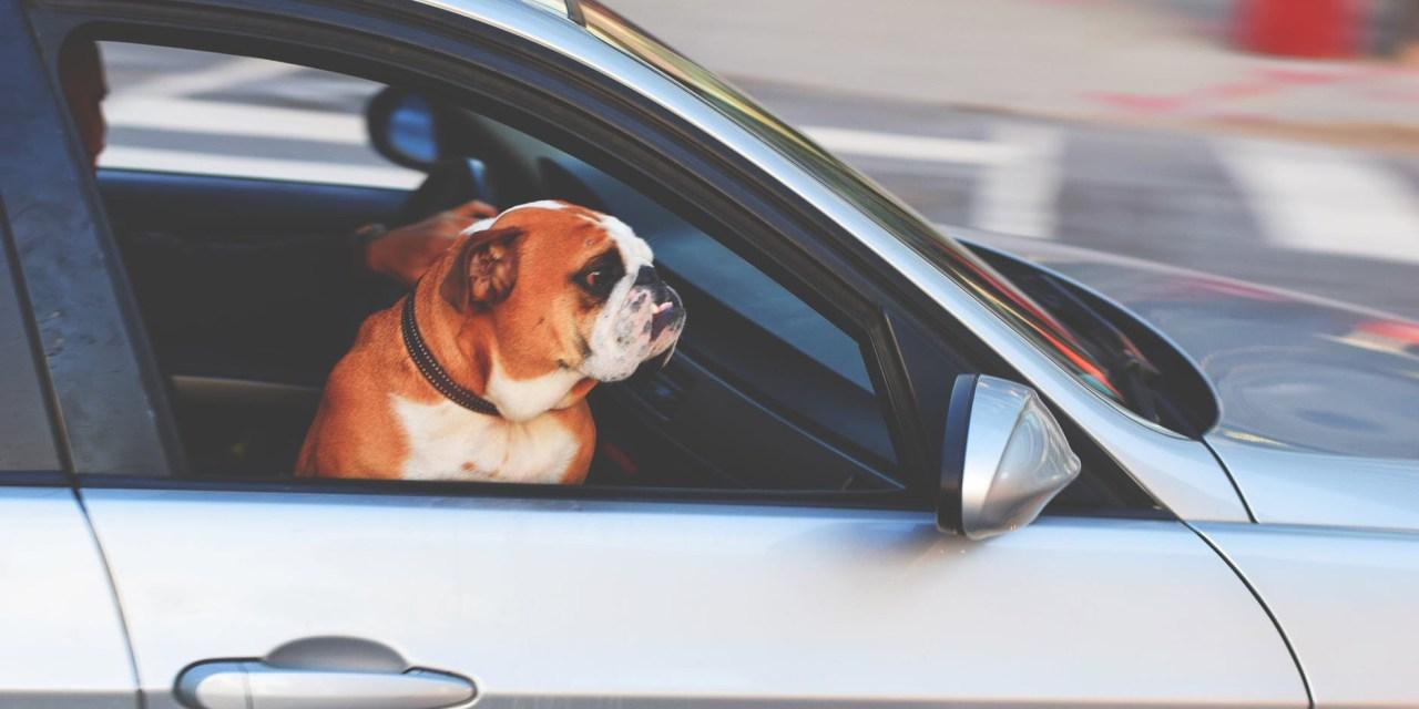 LACEY: Dog In Car