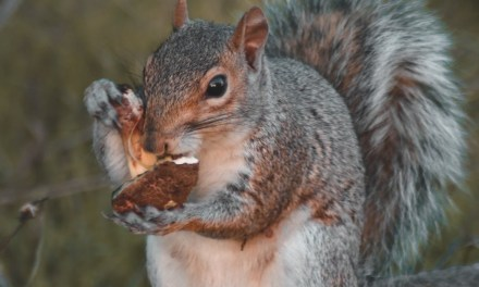 TR: HS East- Squirrel Trouble