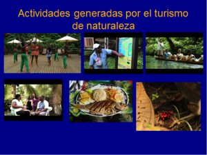Figure 6. Activities generated by local nature tourism