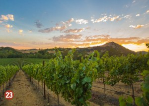 Scenic winery
