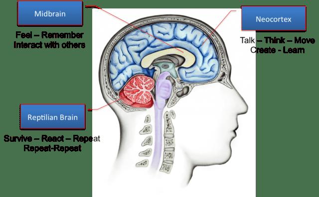 Triune-Brain