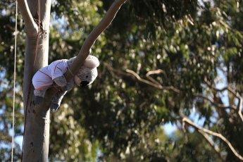 World © Octane Photographic Ltd. Formula 1 – Australian GP - Friday Melbourne Walk. Koala bear. Albert Park, Melbourne, Australia. Friday 23rd March 2018.