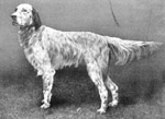 Am/Eng Ch Mallwyd Sirdar- Sire of Sir Roger de Coverly.