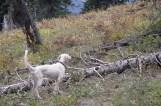 October Wyoming Sage- Star x Alder