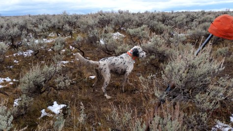 Prince Pointing Dead Sage Grouse