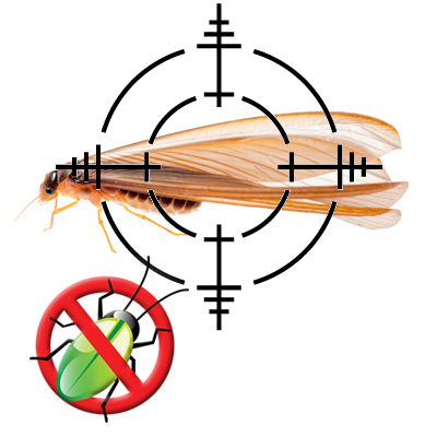 Termite Services at Bug Me Not Pest Control