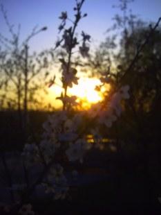 W słońcu