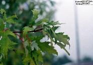 Mokre liście