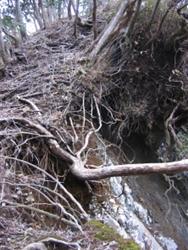 木の根に掴まって登る