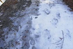 凍っているところ
