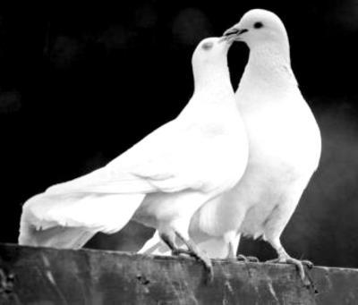 messenger-of-love-2