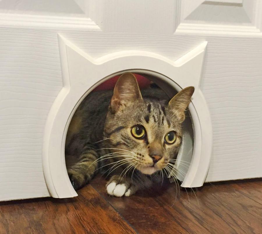 The Kitty Pass A Kitty Shaped Cat Door Pass