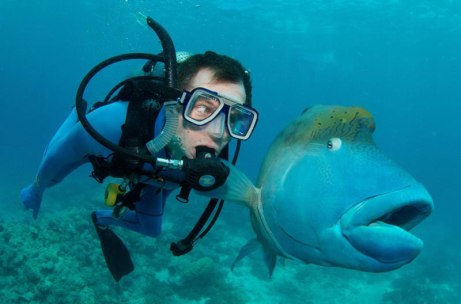 ish-and-scuba-diver-funny-priceless-expression