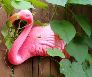 flamingo, Morning Glories and Yard Art