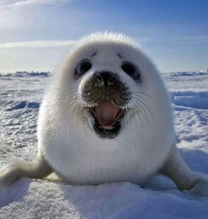 Be Nice, Save a Seal