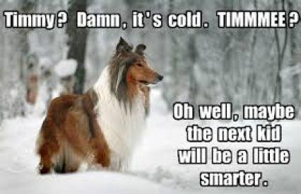 Lassie, Milkshake Day, Programmer's Day