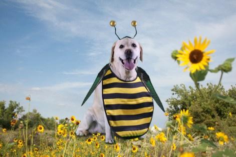daisy bee, bee costume