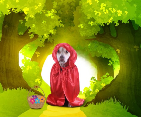 Little Red RIding Hood. Dog Costume