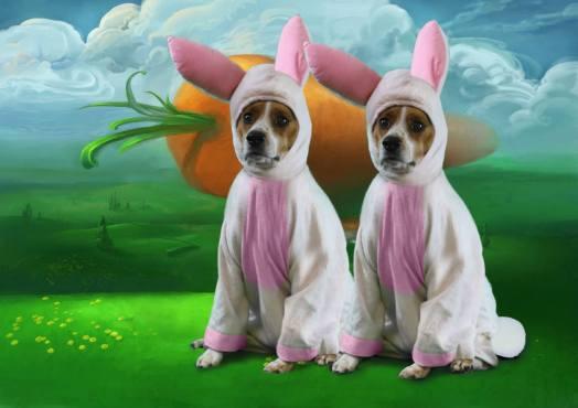 Rabbit Rabbit November