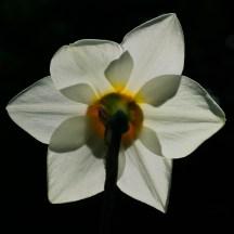 Flowers 5 Star - 12