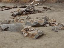 Moeraki Boulders - 6 of 7