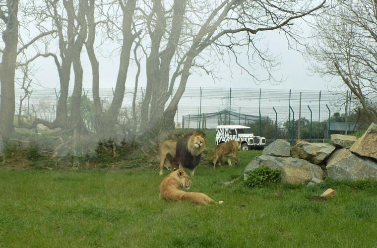 Folly Farm Lions and Jeep
