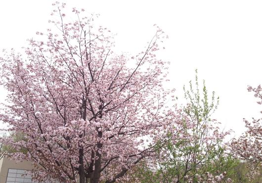 asahiyama_5