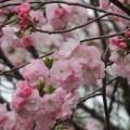 偕楽園梅まつり!100種類、3000本の梅で早春を楽しむ