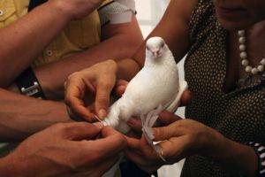 У павильона «Алтарь наций» сотня белоснежных голубей унесла в небо заветные желания одесситов
