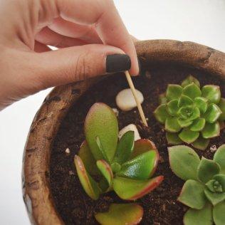 plantas-palito