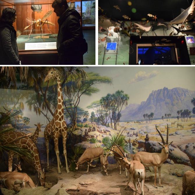 museu-de-história-natural-NY-odiadalila