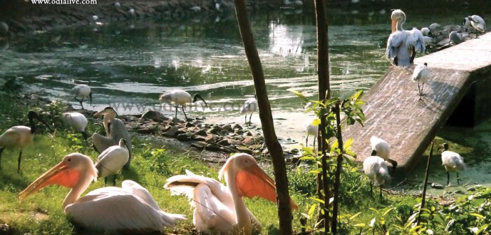Some lesser known facts about Nandankanan zoological Park