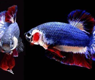Mercado de espécies ornamentais ajuda na preservação