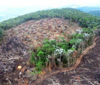 Ibama autoriza desmate de 14 hectares de Mata Atlântica