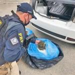 Operação Carcará: PRF detém 35 pessoas por tráfico de drogas em PE, BA e AL