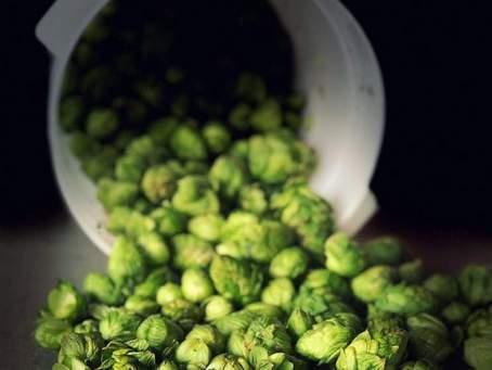 hops-5